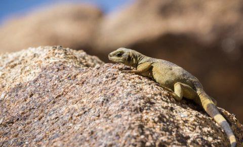 Wildlife Watching in the Desert