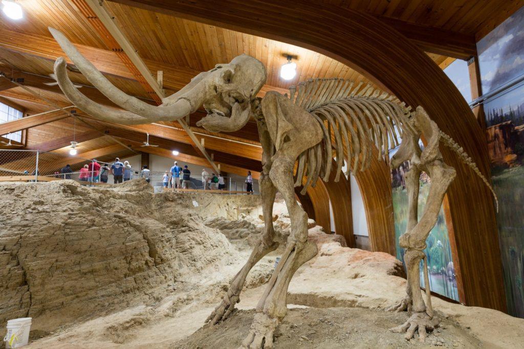 Mammoth bones in South Dakota hot springs as seen during a Yellowstone road trip.