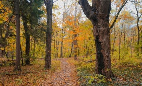 The Poconos in fall