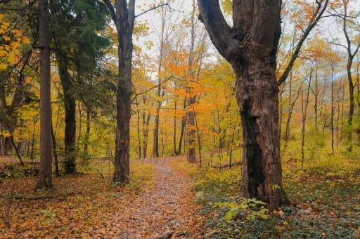 The Poconos; All the Splendor of Fall