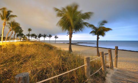 Palm trees on a Florida beach at dusk
