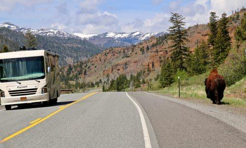 East Yellowstone, Bison, RV, Lodges of East Yellowstone