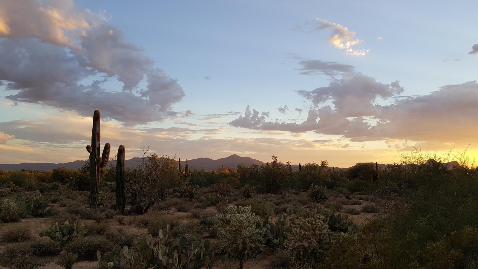 Saguaro cactus and sunset