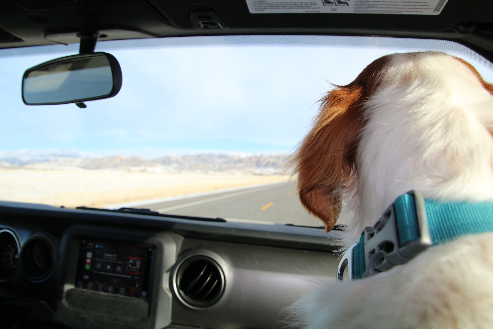 Dog on road trip from pet friendly Wyoming casinos