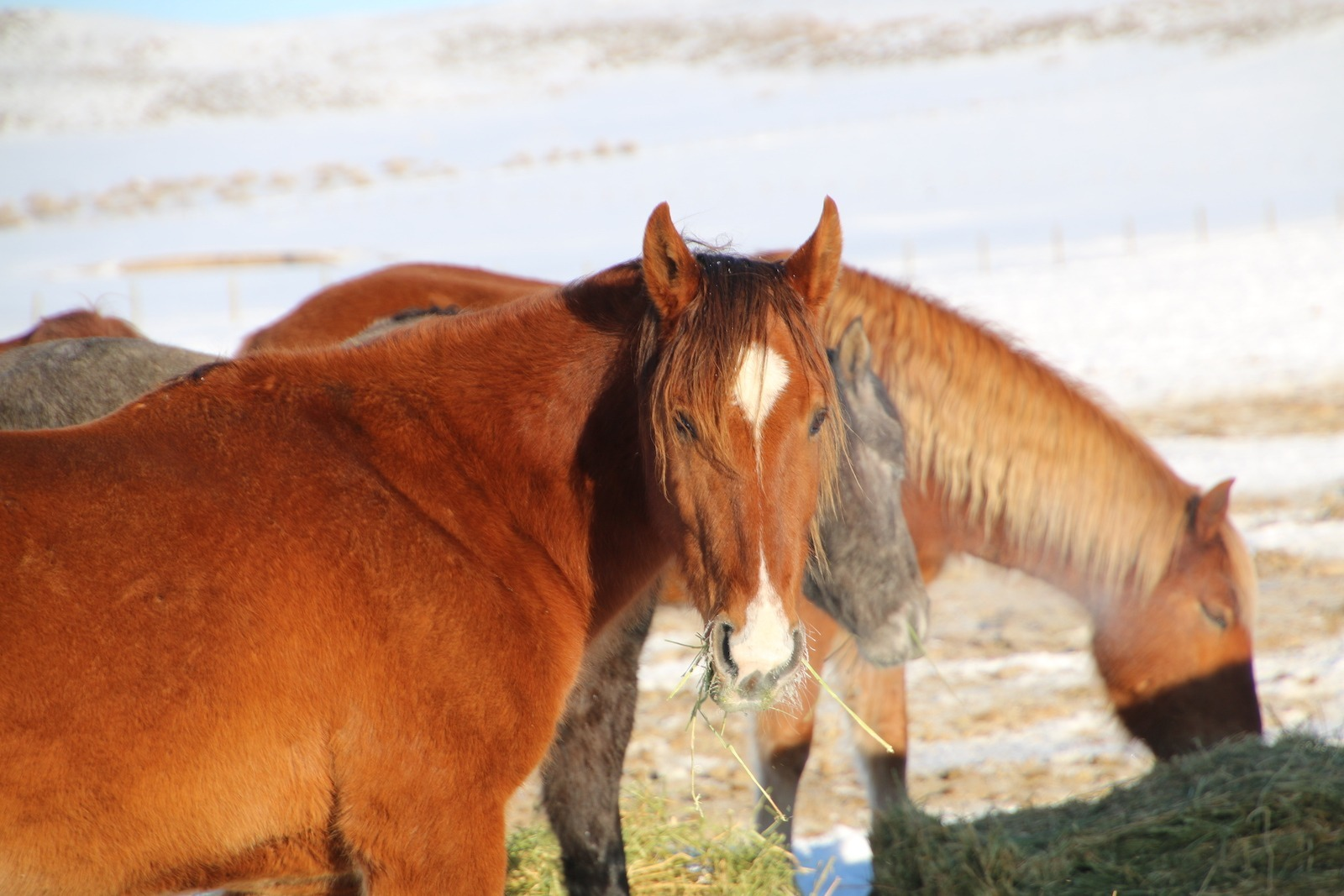 Mustangs at the Wind River Wild Horse Sanctuary