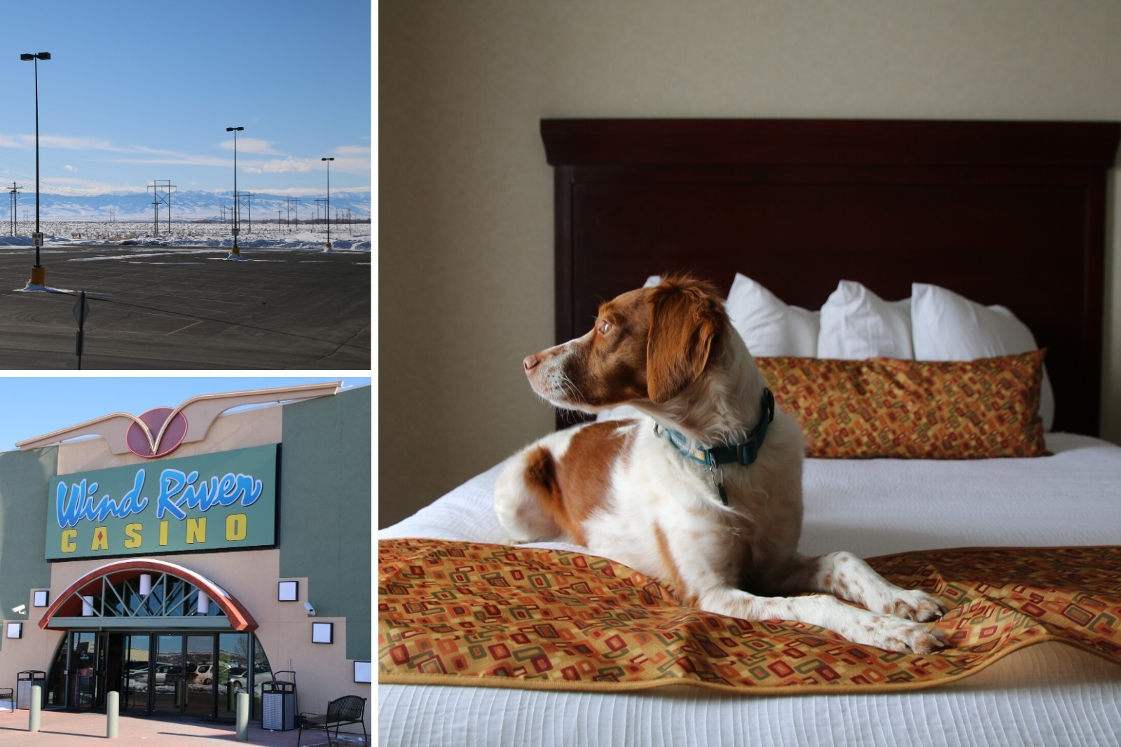 Dog friendly room and views at Wyoming Casino in Riverton: Wind River Hotel & Casino