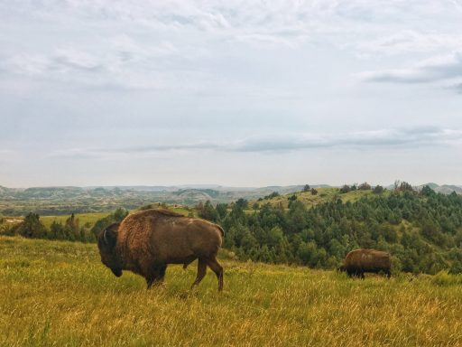 The Best of the Midwest: 7 National Parks You Never Thought to Visit in the Middle of the Country