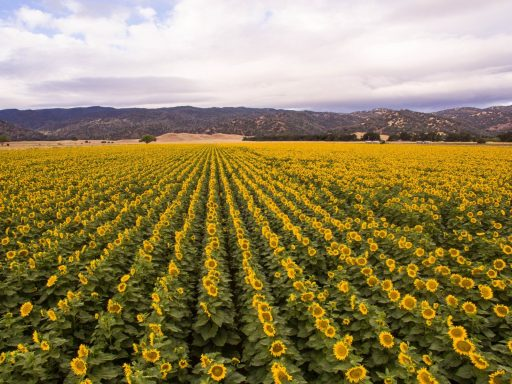 Uncover California's Central Valley in Yolo County