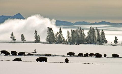 Cody Wyoming Winter Wildlife